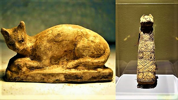 What is inside the mummies of ancient Egyptian cats?   Facts about mummified cats