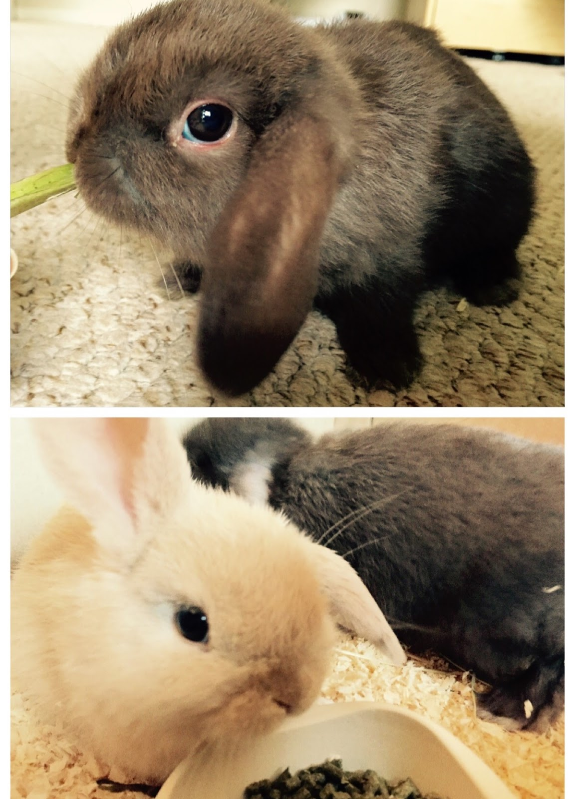 How Much Does A Baby Bunny Cost - Captivating Beauty