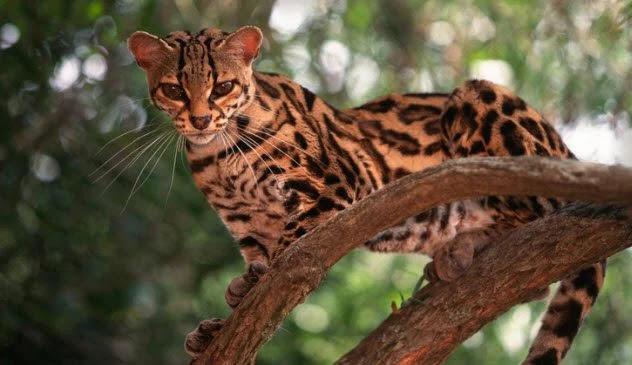 10 phương pháp kỳ lạ mà động vật dùng để giết con mồi