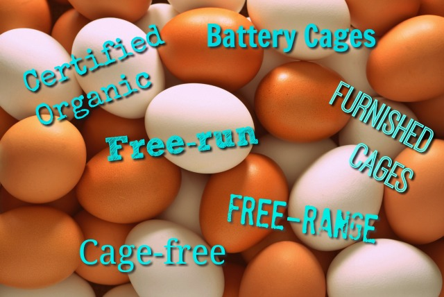 What does cage-free really mean? Understanding Cage-Free, Free-Run & More Egg Terminology