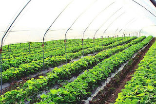 Aquaphonic Systems - The New Revolution in Agriculture and Cultivation