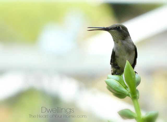 Hummingbird ~ The Bully