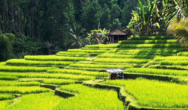 Rekomendasi Tempat Wisata di Ubud Bali