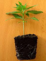 Plantas, Cuidados