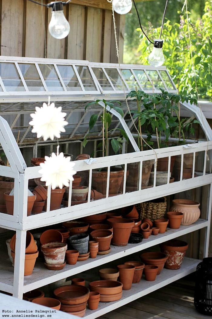 annelies design, blomma, tomater, uteplats, uterum, växthus, drivhus, miniväxthus, altan, pergola, trädäck,