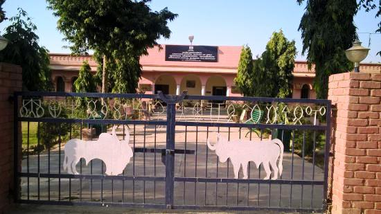 Kalibanga Museum