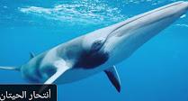 أنتحار الحيتان علي الشواطئ