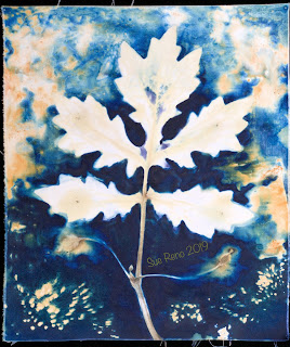 Wet cyanotype_Sue Reno_Image 625