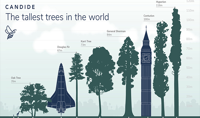The world's highest trees #infographic