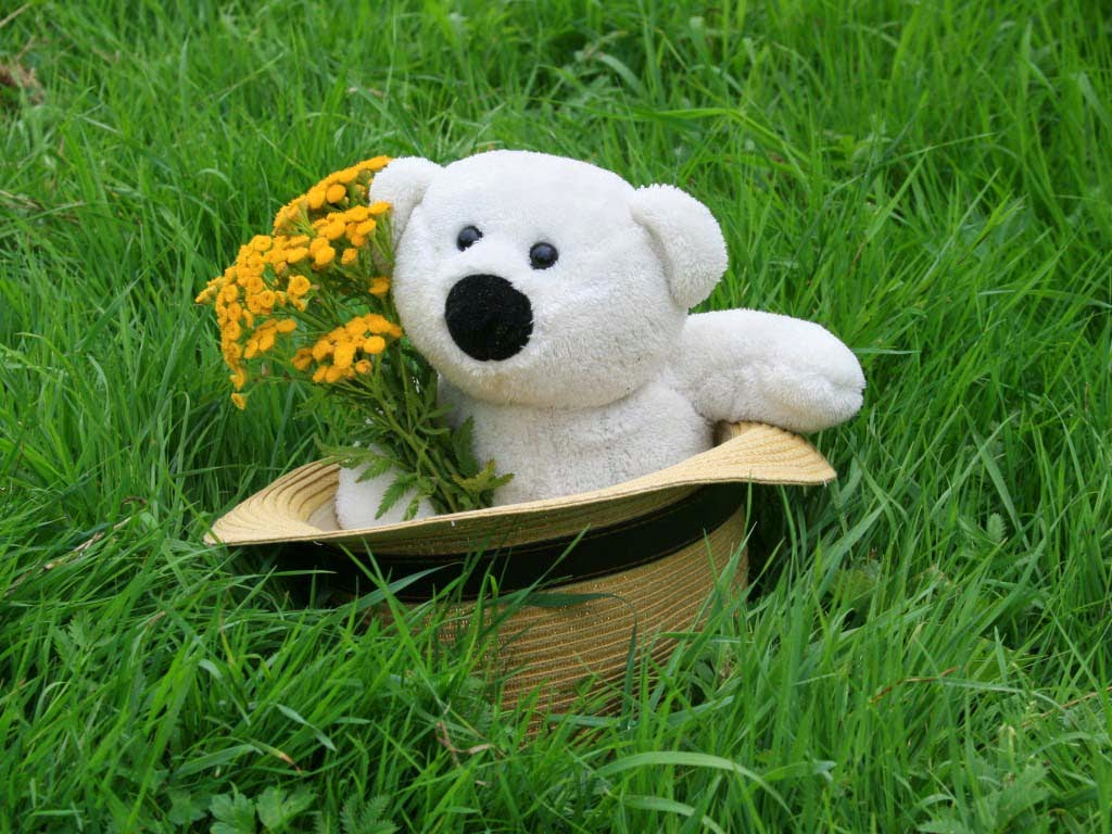 Free Wallpapers Of Cute Teddy Bears Lovely And Beautiful Teddy Bear Wallpapers Allfreshwallpaper