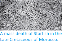 https://sciencythoughts.blogspot.com/2013/12/a-mass-death-of-starfish-in-late.html
