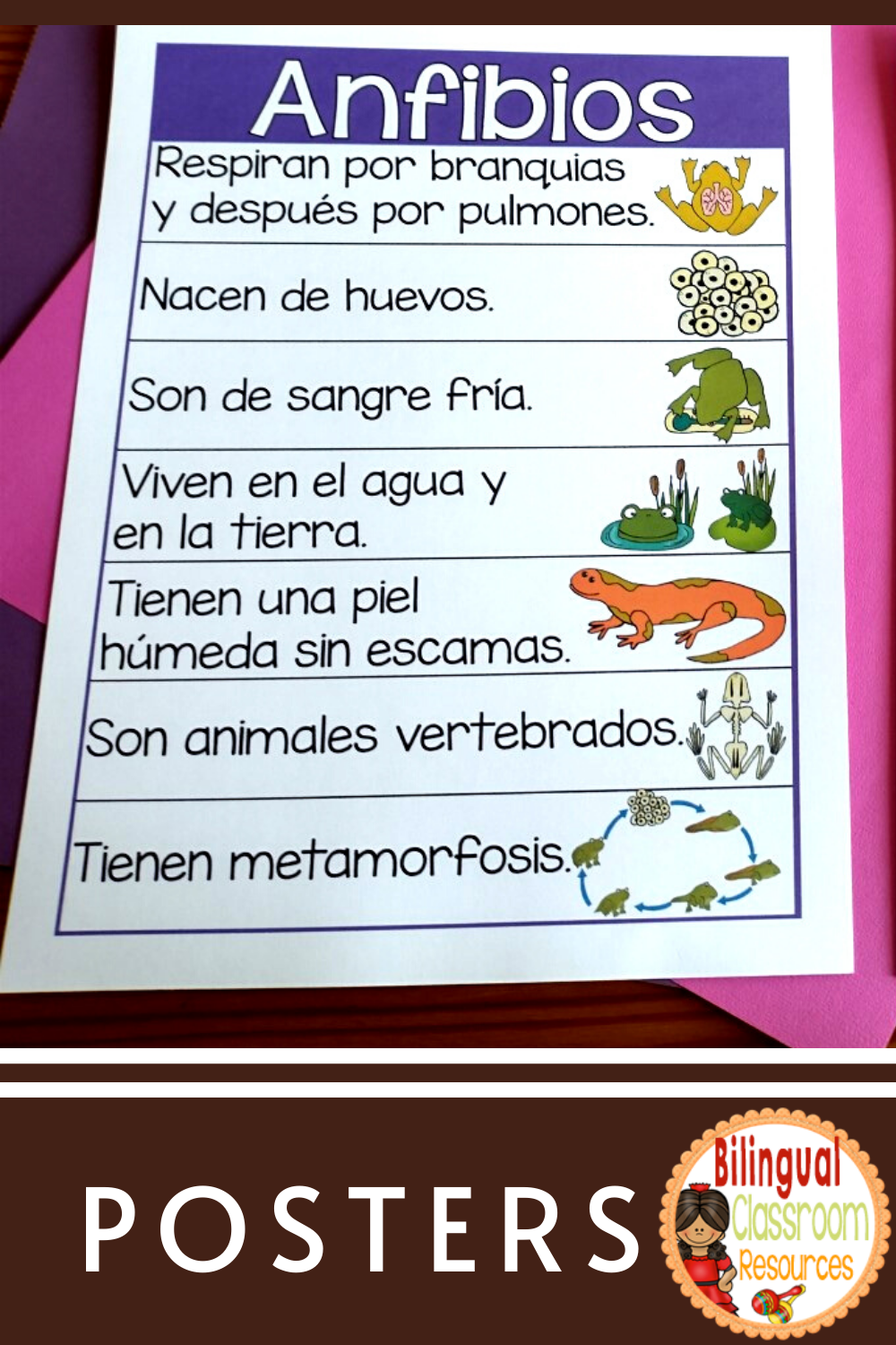 Animal Group Characteristic Posters in Spanish-Grupo de animales