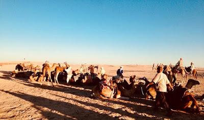 Sahara Desert and Camels