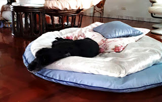 Show on his huge round double pillow bed