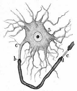 LEET MI Explain: Neuronas e Historia