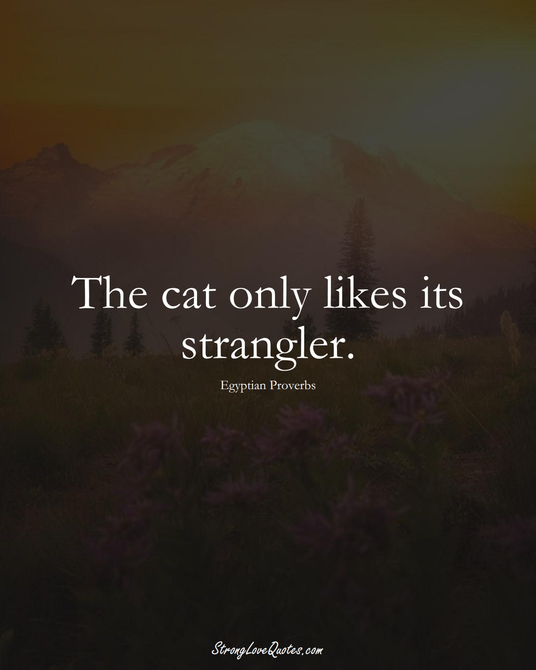 The cat only likes its strangler. (Egyptian Sayings);  #MiddleEasternSayings