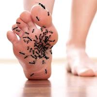 Karıncalanmayı anlatan ayak tabanı altında gezeleyen karınca sürüsü