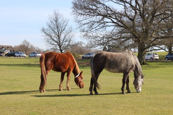 Lyndhurst New Forest Horses Parking