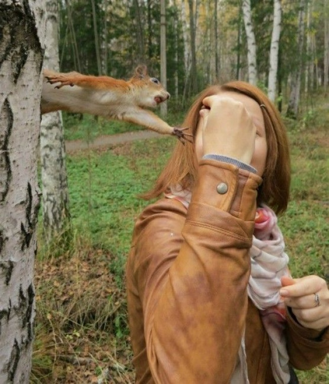 15 смешных животных которые ни за что не отдадут свое
