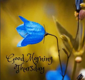 good morning Thursday gif
