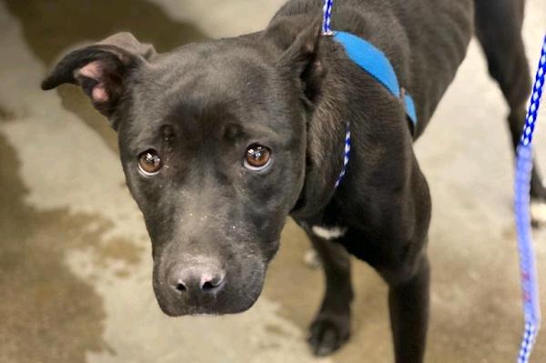 Lost dog travels 100 miles from Iowa to Nebraska in 23 days