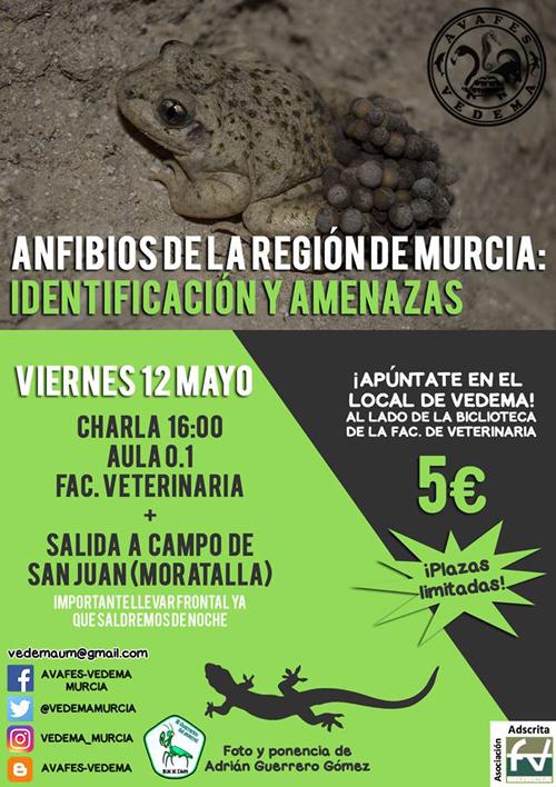 """""""Anfibios de la Región de Murcia: Identificación y amenazas""""."""