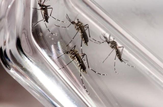 Com o risco de um surto de dengue, Executivo do Município de Roncador decreta Situação de Emergência