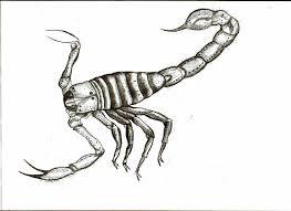 carboniferous invertebrata