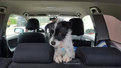 La nueva vida de la perrita que estuvo varios meses esperando en el hospital