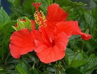 От цветов на которые смотрят к цветам которые едят, цветы, съедобные цветы, травы, съедобные травы, какие цветы можно есть, какие цветы нельзя есть, цветы в кулинарии, съедобный букет, какие цветы можно добавлять в еду, советы кулинарные, экзотическая кулинария, еда, кулинария, едят ли цветы, как есть цветы, От цветов на которые смотрят к цветам которые едят, цветы, съедобные цветы, травы, съедобные травы, какие цветы можно есть, какие цветы нельзя есть, цветы в кулинарии, съедобный букет, какие цветы можно добавлять в еду, советы кулинарные, экзотическая кулинария, еда, кулинария, едят ли цветы, как есть цветы, рецепты из цветов, как добавлять цветы в еду, съедобные цветы, съедобные цветы в кулинарии, живые цветы в дизайне, съедобные цветы для женщин, съедобные комнатные растения, какие бывают цветы для кулинарии, цветы в кулинарии, цветы для украшения блюд, вкусные цветы, как сделать съедобный букет, настурция, съедобные букеты, какие цветы можно есть, какие цветы нельзя есть, пион, какие цветы пригодны в пищу, съедобные цветки в горшке, съедобные цветки растений, съедобные цветки кактуса, съедобные цветки лилии, съедобные цветки гибискуса, настурция цветки съедобные, какие цветы можно есть, какие части цветков можно есть, ядовитые цветки, как есть цветы, декор блюд съедобными цветами,рецепты из цветов, как добавлять цветы в еду, съедобные цветы