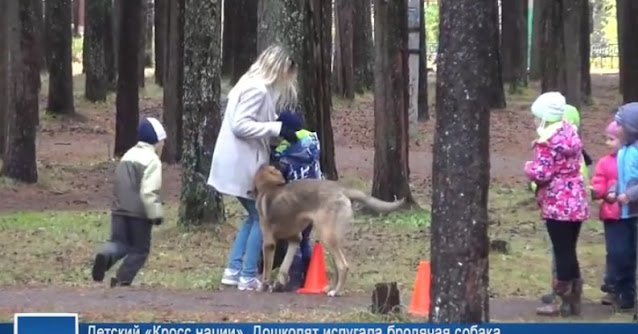 Бродячая собака напала на ребёнка на улице, но тут в дело вмешался отважный кот — видео