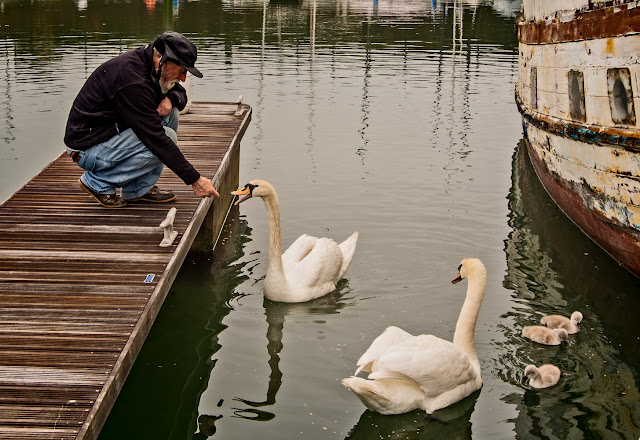 Photo of Phil Lee with the swans at Maryport Marina