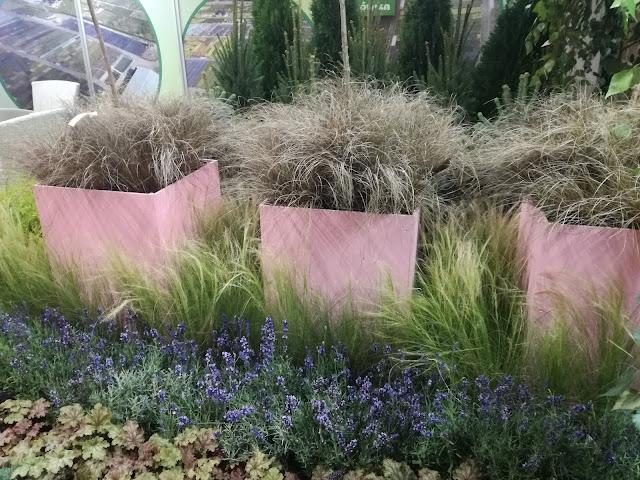 donice ogrodowe, trawy w donicach