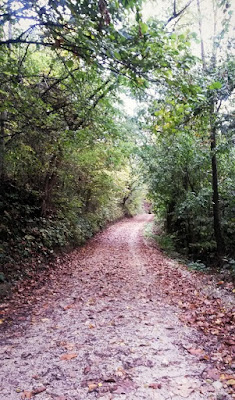 photo of forest road, slika šumskog puta, jesen, autumn