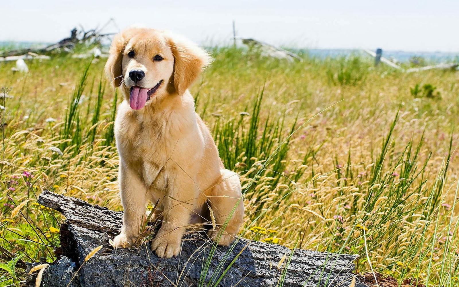 honden achtergronden hd wallpapers - photo #15
