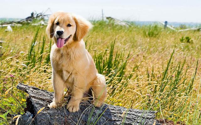 Hond op een boomstronk