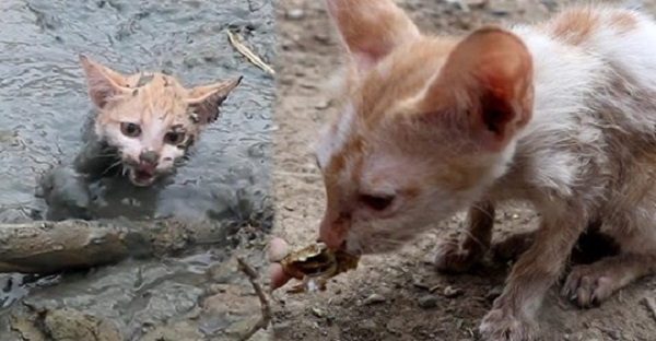 Люди спасли котика, который застрял в болоте