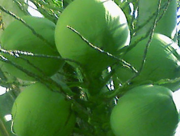 Ramuan Herbal Untuk Mengatasi Batuk Kering