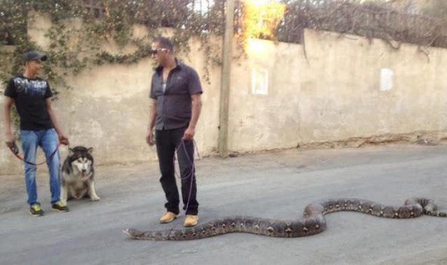 Meu animal de estimação é uma cobra