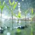 Từ vựng tiếng Hoa: Thời tiết