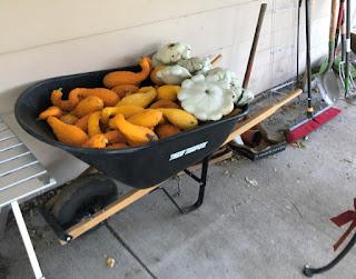 Wheel barrow full of squash on patio
