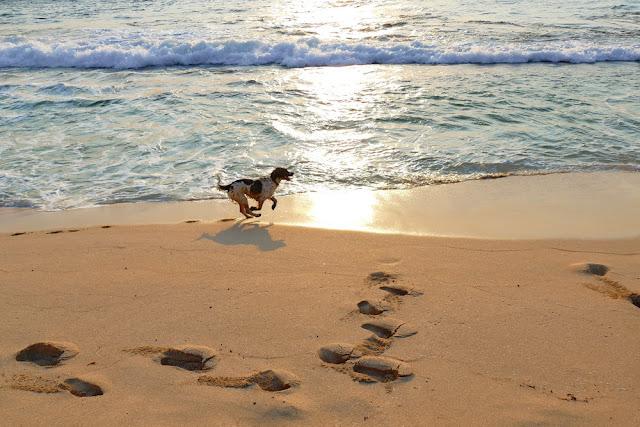 Prevelly, Strand, Beach, Hund, erlaubt, Sonnenuntergang, relaxen