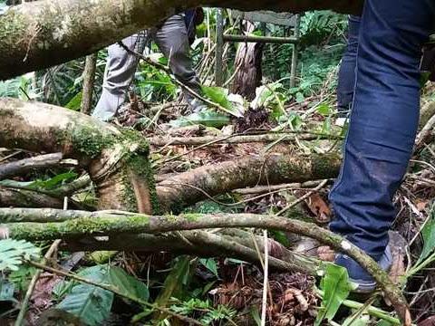 Pengalaman Blusukan ke Hutan Alami Kawasan Taman Nasional Gunung Gede Pangrango