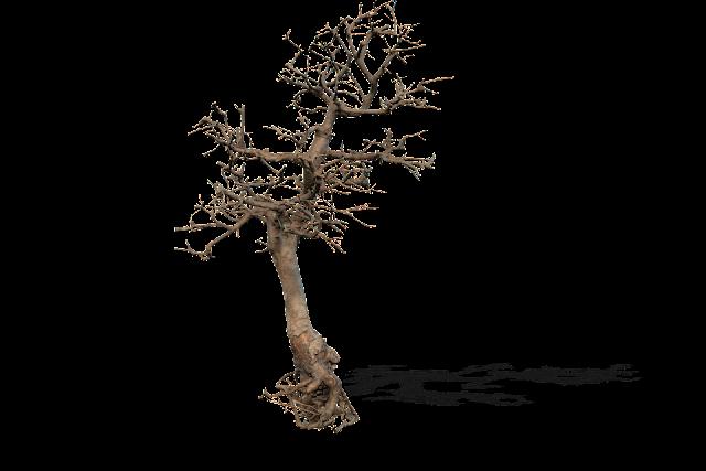 DEATH TREE 004