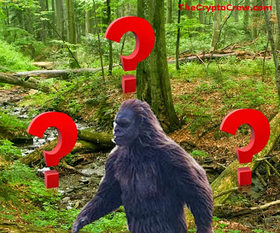 Experts answers questions about bigfoot
