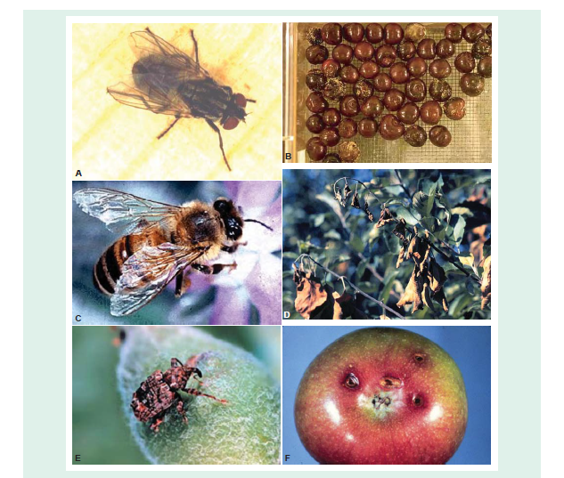 insect-pathogen