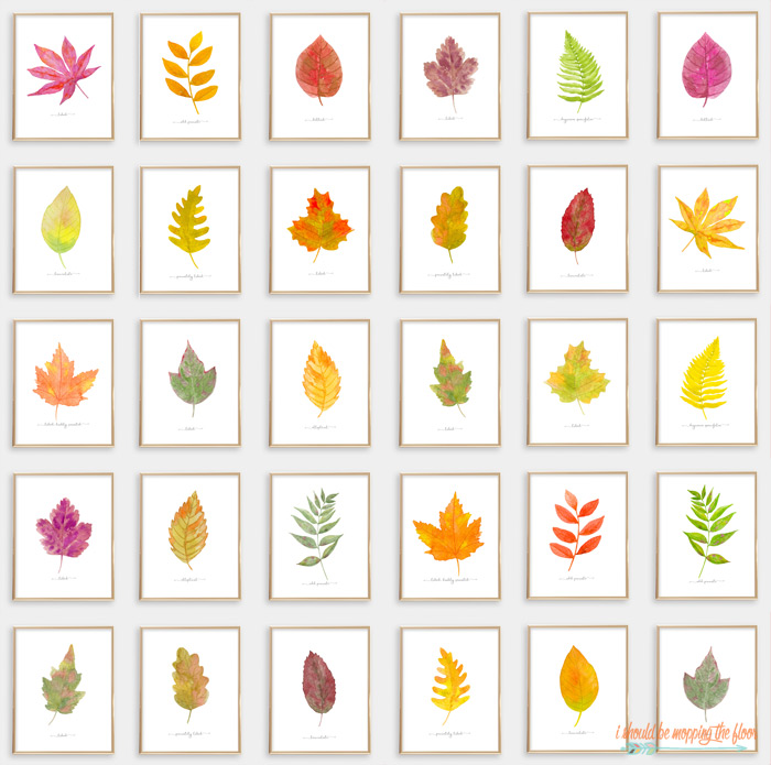 30 Fall Leaf Printables