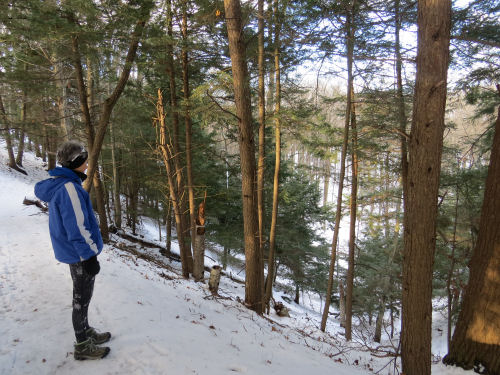 Ludington State Park trail
