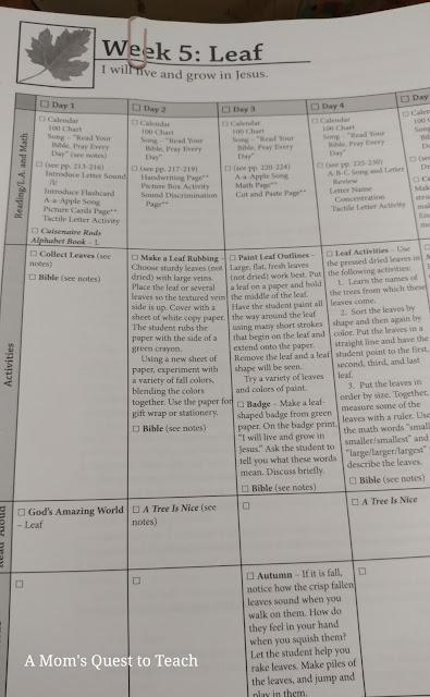 Week 5: Leaf lesson plan