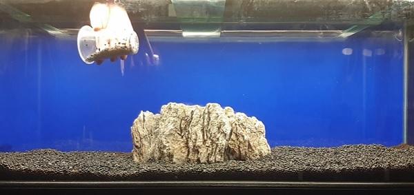 Aquarium substrate & rocks